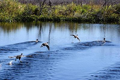 Photograph - Walking On Water 1 by Sheri McLeroy