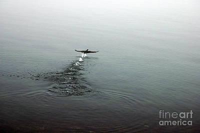 Art Print featuring the photograph Walking On Water by Randi Grace Nilsberg
