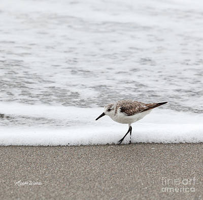 Photograph - Walking The Beach by Michelle Wiarda-Constantine