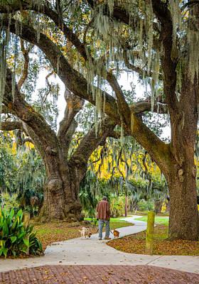 Oak Photograph - Walking The Dogs In New Orleans by Steve Harrington