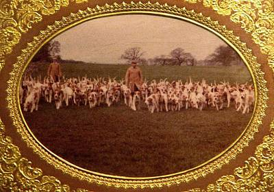 Foxhound Photograph - Walking The Hounds by Angela Davies