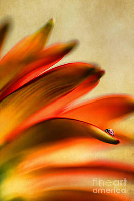 Gerber Daisy Photograph - Walking The Line by Darren Fisher