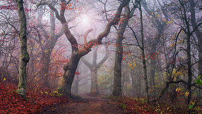 Fall Leaves Photograph - Walking The Old Path. by Leif L?ndal