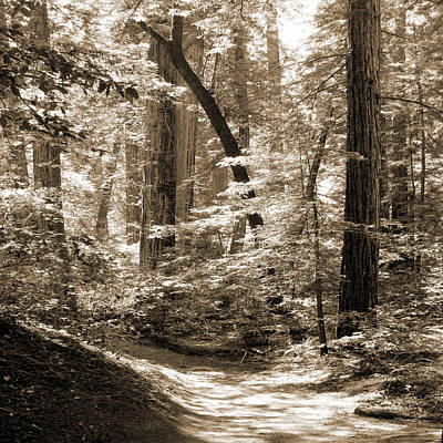 Walking Through The Redwoods Art Print by Mike McGlothlen
