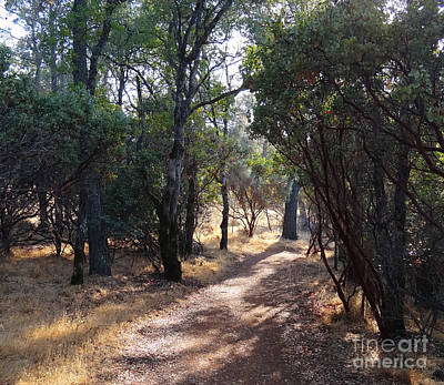Walking Trail Art Print