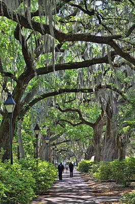 Photograph - Walking Under The Oaks by Allen Beatty