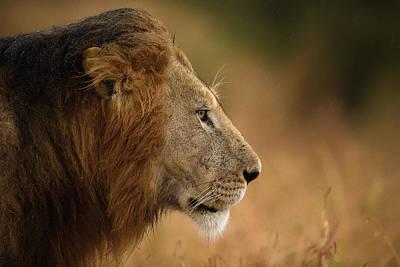 Masai Mara Photograph - Walking Under The Rain by Faisal Alnomas