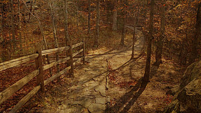 Photograph - Walkway Through The Forest by Sandy Keeton