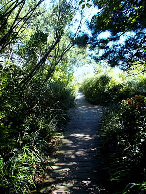 Photograph - Walkway Through The Gardens At Hereford Lighthouse by Pamela Hyde Wilson