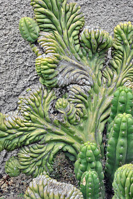 Wall Cactus Art Print by Misty Stach