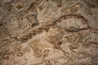 Photograph - Wall Of Dinosaur Bones by Melany Sarafis