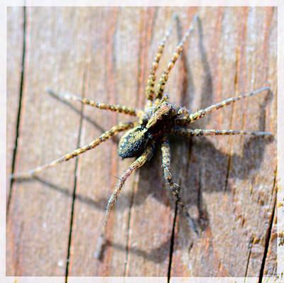 Wall Spider Original