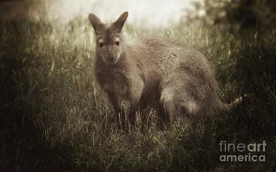 Kangaroo Mixed Media - Wallaby by Elaine Manley