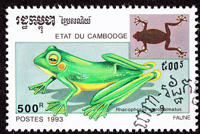 Wallace's Flying Frog Art Print