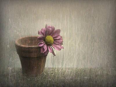 Flowerpots Photograph - Wallflower by Jennifer Woodward