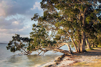 Photograph - Wallis Lake Evening by Nicholas Blackwell