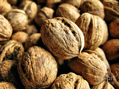 Photograph - Walnut  by Daliana Pacuraru