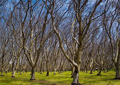 Walnut Tree Photograph - Walnut Grove by Kathleen Bishop