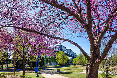Wall Art - Photograph - Walnut Street Bridge In Spring by Tom and Pat Cory