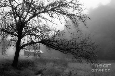 Walnut Tree Photograph - Walnut Tree Along The Creek by Michael Eingle