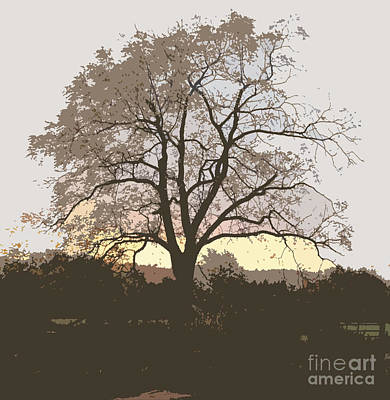 Photograph - Walnut Tree Series Cutout by Conni Schaftenaar