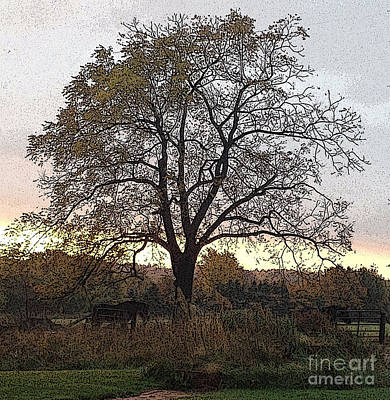 Horse Photograph - Walnut Tree Series Poster Edges by Conni Schaftenaar
