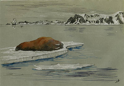 Pencil Painting - Walrus On The Iceberg by Juan  Bosco