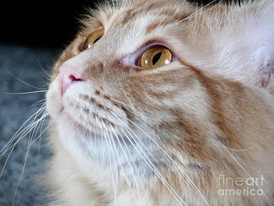 Feline Photograph - Walter The Cat by Deborah Smolinske