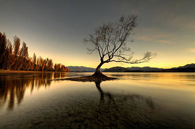 Photograph - Wanaka - That Tree 1 by Brad Grove
