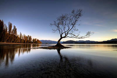 Photograph - Wanaka - That Tree 2 by Brad Grove