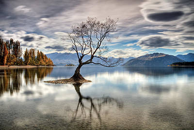 Photograph - Wanaka - That Tree 4 by Brad Grove