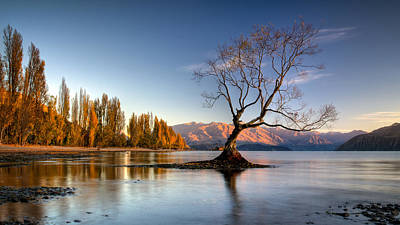 Photograph - Wanaka - That Tree 5 by Brad Grove