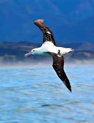 Photograph - Wandering Albatross In Flight by Amanda Stadther