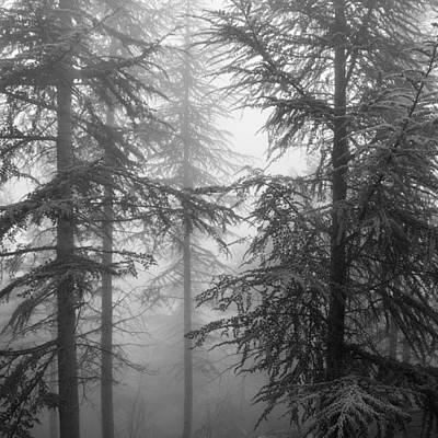 Landscapes Photograph - Wandering Into The Fog by Guido Montanes Castillo
