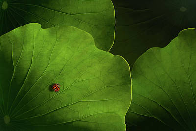 Ladybug Photograph - Wanderlust by Heather Bonadio