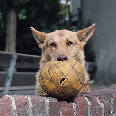 Photograph - Wanna Play? by Cornelis Verwaal