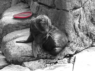 Pittsburgh Zoo Photograph - Want To Play by Chad Thompson