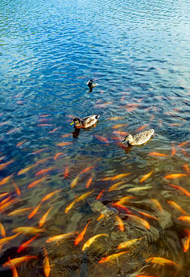 Photograph - Waokele Pond And Koi Study 6 by Robert Meyers-Lussier