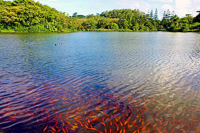 Photograph - Waokele Pond And Koi Study 7 by Robert Meyers-Lussier