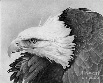 Black And White Eagle Drawing - War Bird by Alan Palmer