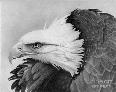 Bald Eagle Pencil Drawing Drawing - War Bird by Alan Palmer