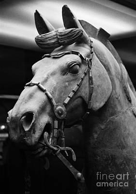 Photograph - War Horse by Sue Harper