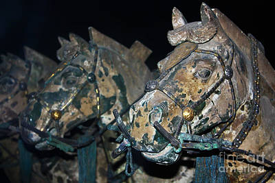 Photograph - War Horses by Sue Harper
