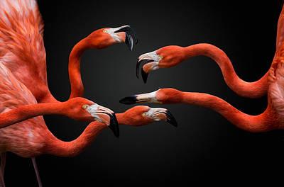 Flamingos Photograph - War by Pedro Jarque