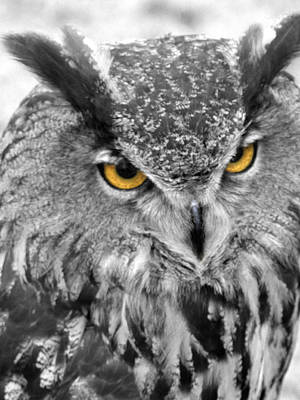 Hdr Photograph - Watching You Owl by John Straton