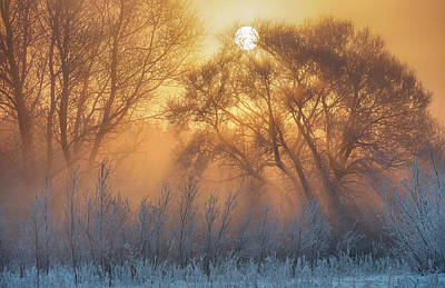 Winter Trees Photograph - Warm And Cold by
