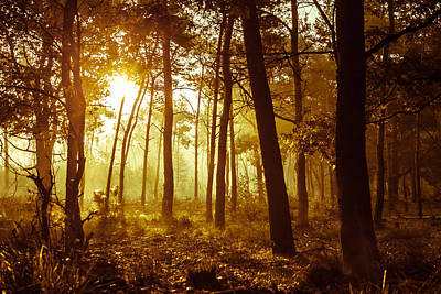 Photograph - Warm Autumn Morning by Semmick Photo