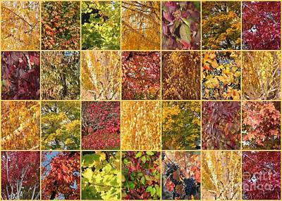Photograph - Warm Autumn Quilt Collage by Carol Groenen