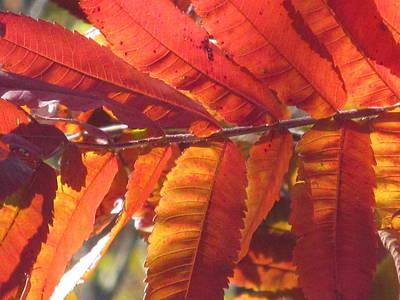 Warm Autumn Sun Art Print by Loretta Pokorny