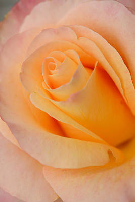 Photograph - Warm Blush  by Sandy Fisher